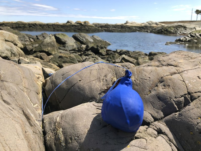 In this Thursday, April 25, 2019 photo, a balloon sits tangled on the rocky coast after washing ashore in Biddeford Pool, Maine. (AP Photo/Robert F. Bukaty)