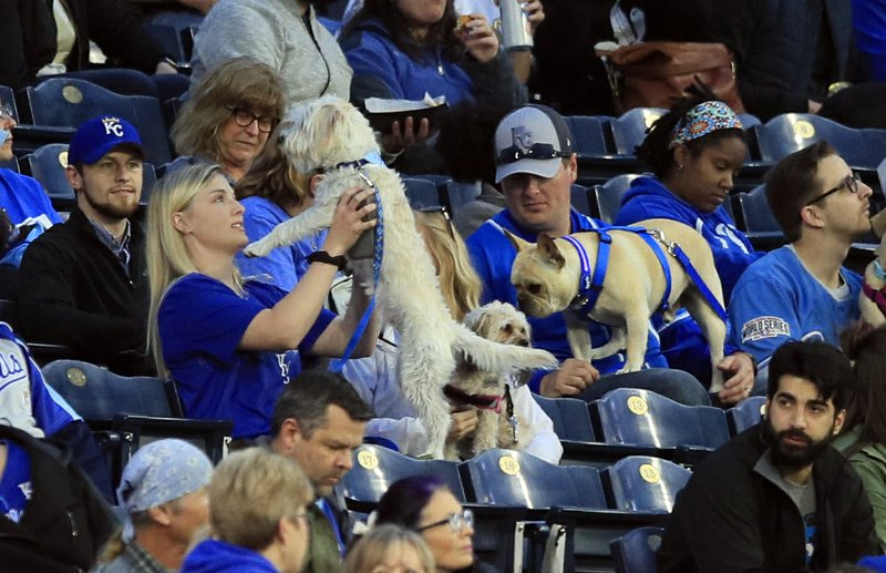 Fans hold their dogs during the third inning of a baseball game between the Kansas City Royals and the Tampa Bay Rays at Kauffman Stadium in Kansas City, Mo., Monday, April 29, 2019. It was