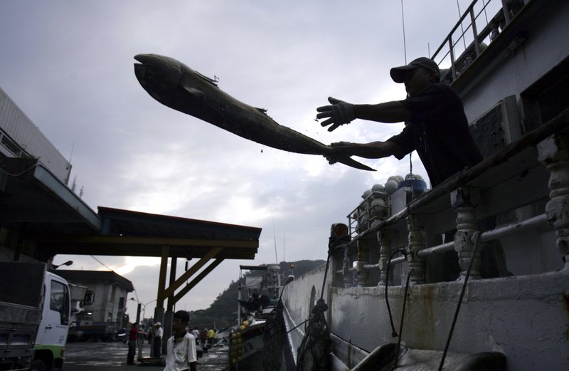 FILE - In this June 21, 2015, file photo, a fisherman unloads his catch in the port of Suao, north eastern Taiwan. (AP Photo/Wally Santana, File)