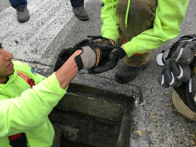 Ducklings are nestled in the hands of Catasauqua firefighters after being pulled from a storm drain along Edward Lane, Tuesday, May 7, 2019, in Catasauqua, Pa. (Kayla Dwyer/The Morning Call via AP)