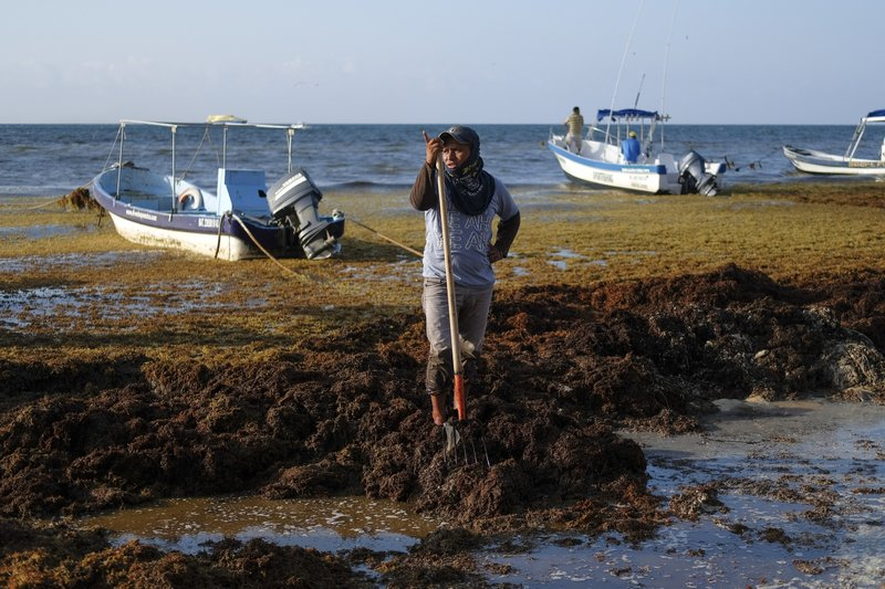 A worker pauses from removing sargassum seaweed from the shore of Playa del Carmen, Mexico, Wednesday, May 8, 2019. (AP Photo/Victor Ruiz)