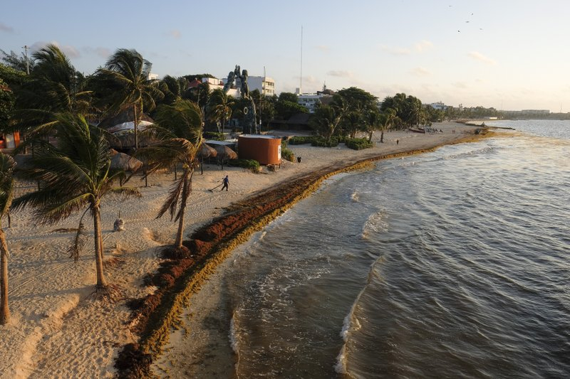 Sargassum seaweed covers the beach in Playa del Carmen, Mexico, Wednesday, May 8, 2019. Local hotel owners and tourism industry workers, which is just about everybody, to some extent, in Quintana Roo, are feeling angry and abandoned by the federal government. (AP Photo/Victor Ruiz)