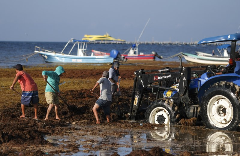Workers remove sargassum seaweed from the beach in Playa del Carmen, Mexico, Wednesday, May 8, 2019. Shoveling or bulldozing up sargassum once it washes up on shore is a herculean task, as it returns hours later. (AP Photo/Victor Ruiz)