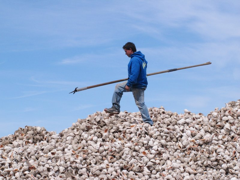 FILE - In this April 16, 2015, photo, a worker walks atop a pile of whelk shells shortly before they were dumped into Barnegat Bay in Berkeley Township, N. (AP Photo/Wayne Parry, File)