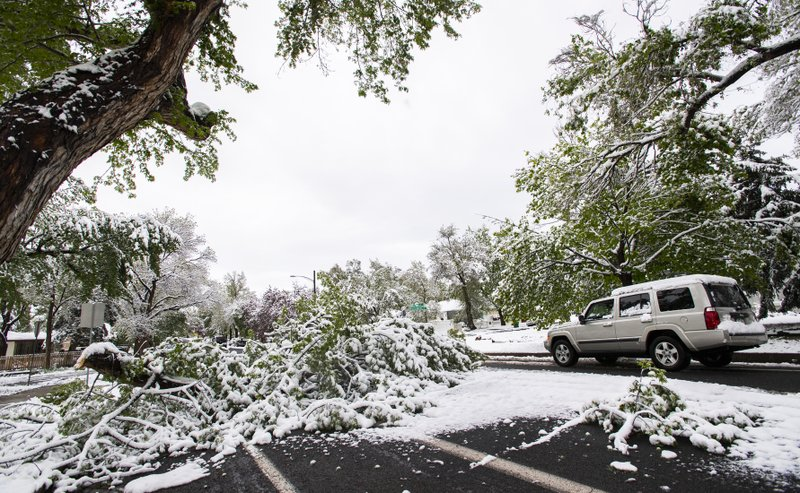 A vehicle drives around a large tree limb blocking the southbound lane of N. Institute Street in Colorado Springs, Colo., Tuesday, May 21, 2019, after a spring snow storm left up to 19 inches of snow in parts of El Paso County.(Christian Murdock/The Gazette via AP)
