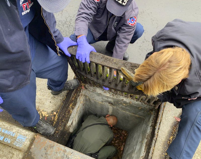 This photo provided by the Santa Clara County Sheriff's Office shows a deputy and firefighters working to rescue a 6-week-old kitten from a storm drain in Cupertino, Calif., Tuesday, May 21, 2019. A woman walking in Cupertino heard meowing and looked down to see the tiny ball of fur at the bottom of the drain Tuesday morning. The Sheriff's office says members of the San Jose Fire Department lifted the heavy metal grating on the drain and a deputy jumped down to rescue the orange and white calico.  (Santa Clara County Sheriff's Office via AP)
