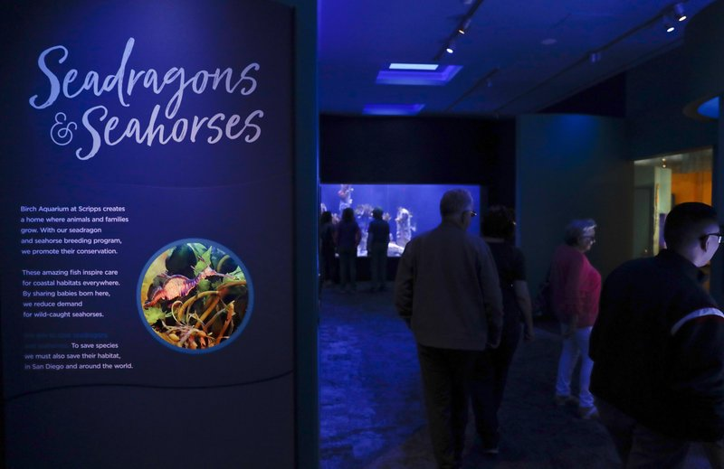 In this Friday, May 17, 2019 photo, visitors walk through an exhibit dedicated to seahorses and sea dragons at the Birch Aquarium at the Scripps Institution of Oceanography at the University of California San Diego in San Diego. The Southern California aquarium has built what is believed to be one of the world's largest habitats for the surreal and mythical sea dragons outside Australia, where the native populations are threatened by pollution, warming oceans and the illegal pet and alternative medicine trades. (AP Photo/Gregory Bull)