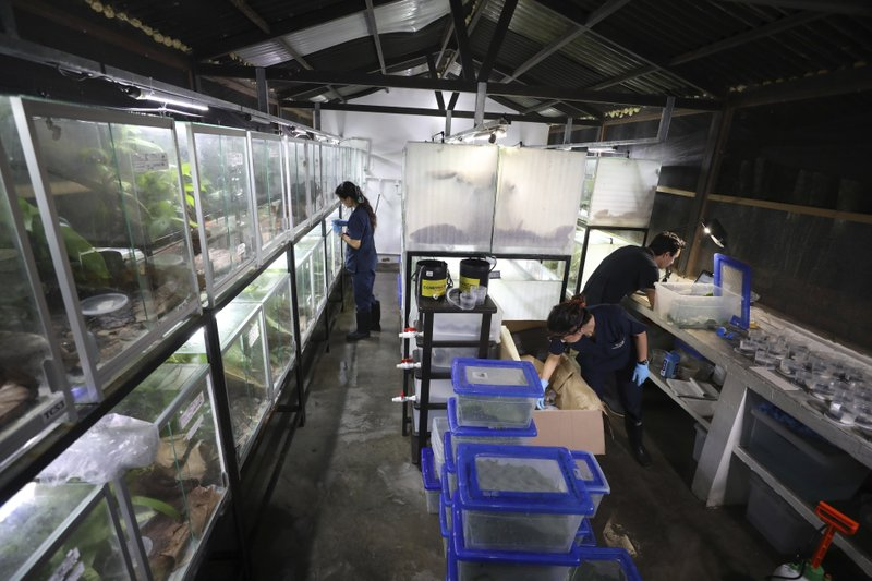 Workers pack frogs for export to the U.S. at the