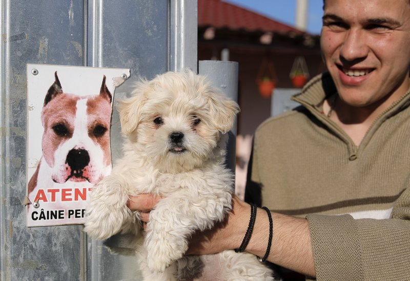 In this picture taken Wednesday, May 22, 2019, Liviu Alexandru Iorga holds puppy Cora as he stands next to a dangerous dog sign outside his home in Luncavita, Romania. The Romania village of Luncavita has benefited greatly from millions in development funds from the European Union, but few of its residents bothered to vote in previous European Parliamentary elections. (AP Photo/Vadim Ghirda)