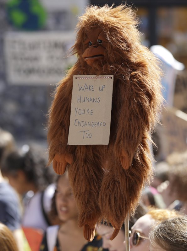 A toy monkey wears a banner as young demonstrators take part in a demonstration organised by 'Global Strike 4 Climate' in Parliament Square in London, Friday, May 24, 2019. (AP Photo/Kirsty Wigglesworth)