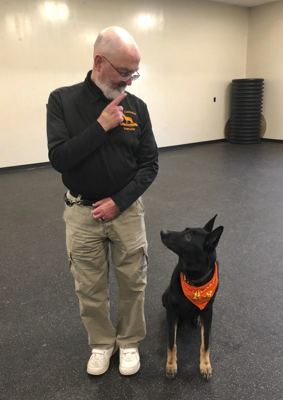 In this May 7, 2019 photo, Professor Stephen Mackenzie, head of the university's canine training program does an obedience drill with his dog Kimo, at the State University of New York, Cobleskill, in Cobleskill, N.Y. Mackenzie, who has trained military and police dogs for 40 years and authored professional manuals on the subject, said he developed Cobleskill's bachelor of technology degree partly in response to a heightened demand for working dogs in the aftermath of 9/11. (AP Photo/Mary Esch)