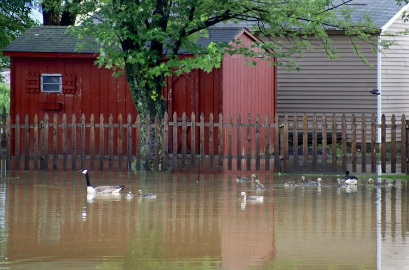 A flock of Canada geese swim in floodwaters surrounding buildings on Wednesday, May 29, 2019, in Zelienople, Pa. More storms are predicted for the area. The Mayor of Zelienople, Thomas Oliverio, declared a State of Emergency Tuesday night after heavy rain caused the flooding. (AP Photo/Keith Srakocic)