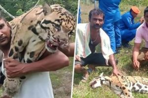 Cruel poachers smile and laugh while holding dead rare leopardad