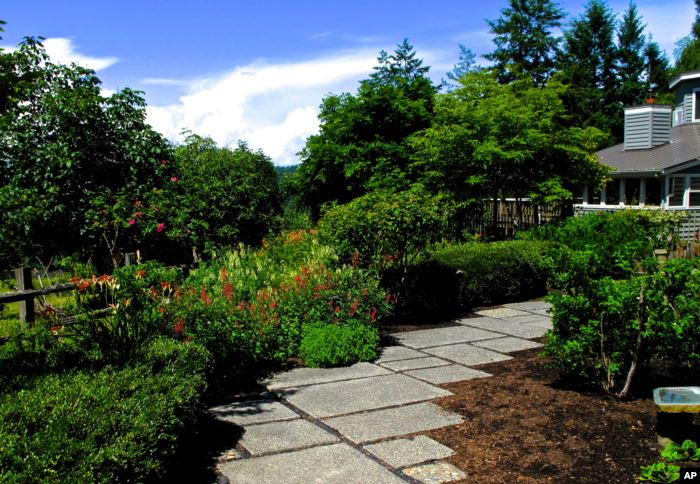 The front lawn of this home was reclaimed using shrubs, trees, flowering pere