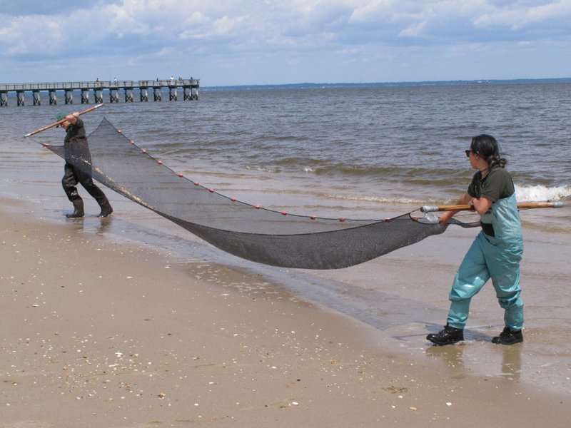 In this June 3, 2019 photo, Frankie Wilton,left, and Emily McGuckin, both employees of the Monmouth County parks system, drag a seining net through the shallow waters of Raritan Bay in Middletown N.J. as part of a program to show schoolchildren the various types of marine life in the bay. New Jersey environmental officials are due to decide Wednesday, June 5 on key permits for a nearly $1 billion pipeline that would bring natural gas from Pennsylvania through New Jersey, out into Raritan Bay and into the ocean before reaching New York and Long Island. (AP Photo/Wayne Parry)