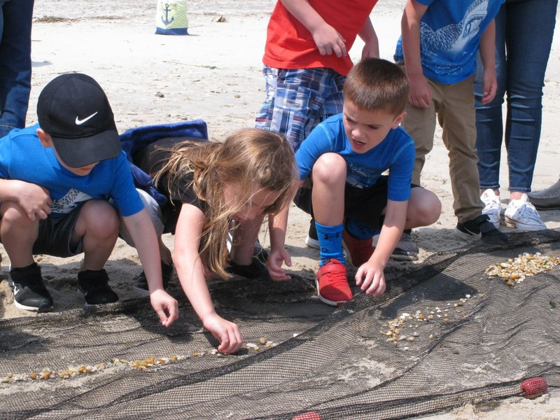 In this June 3, 2019 photo, schoolchildren pick tiny fish out of a net on the Raritan Bay shorefront in Middletown N.J. New Jersey environmental officials are due to decide Wednesday, June 5 on key permits for a nearly $1 billion pipeline that would bring natural gas from Pennsylvania through New Jersey, out into Raritan Bay and into the ocean before reaching New York and Long Island. (AP Photo/Wayne Parry)