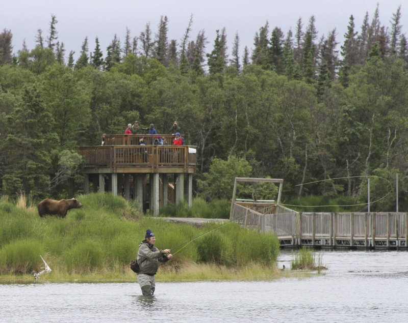 FILE - In this July 4, 2013, file photo, a bear walks between a viewing stand and a fisherman in Katmai National Park and Preserve, Alaska. The National Park Service has completed a project to relieve an Alaska traffic jam. A new elevated bridge and boardwalk across the Brooks River in Katmai National Park and Preserve is expected to halt heart-stopping encounters between human pedestrians and brown bears both using the old bridge. (AP File Photo/Mark Thiessen, File)