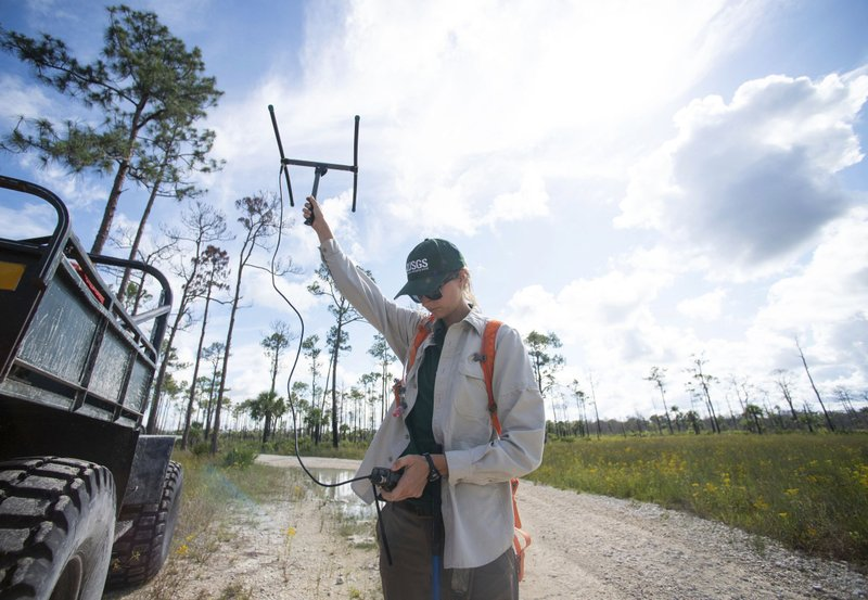 In this Thursday, June 6, 2019 photo, biologist Jillian Josimovich, with the U.S. Geological Survey, uses a tracker to find a Burmese python named Charlie 5 at Big Cypress National Preserve, Fla. A radio transmitter is surgically installed into the snake's scaly skin, making it easier for researchers to locate snakes in the study. (Leah Voss/TCPalm.com via AP)