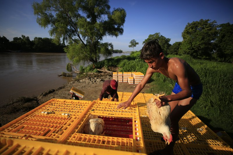 A boy repacks chickens more densely, to be loaded onto inner tube and plank rafts and taken across the Suchiate River to Guatemala, in Ciudad Hidalgo, Mexico, Saturday, June 15, 2019. A free flow of goods and people crossing by raft has fueled the economy on both sides of the river as long as residents can remember, and many worry that the arrival of the National Guard could hurt business. (AP Photo/Rebecca Blackwell)