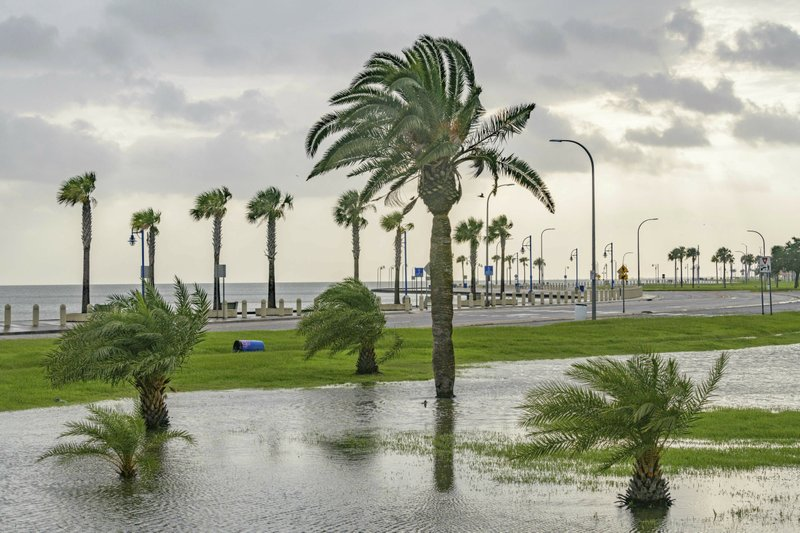 Wind blows through the trees as there is very little flooding from Lake Pontchartrain on Lakeshore Drive in New Orleans, Saturday, July 13, 2019 ahead of landfall of Tropical Storm Barry in the Gulf of Mexico. (AP Photo/Matthew Hinton)