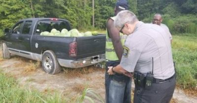 North Carolina watermelon thief nabbed after getting stuck in field