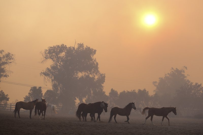 Horses are seen at a ranch in Simi Valley, Calif., Wednesday, Oct. 30, 2019. A large new wildfire has erupted in wind-whipped Southern California, forcing the evacuation of the Ronald Reagan Presidential Library and nearby homes.  (AP Photo/Ringo H.W. Chiu)