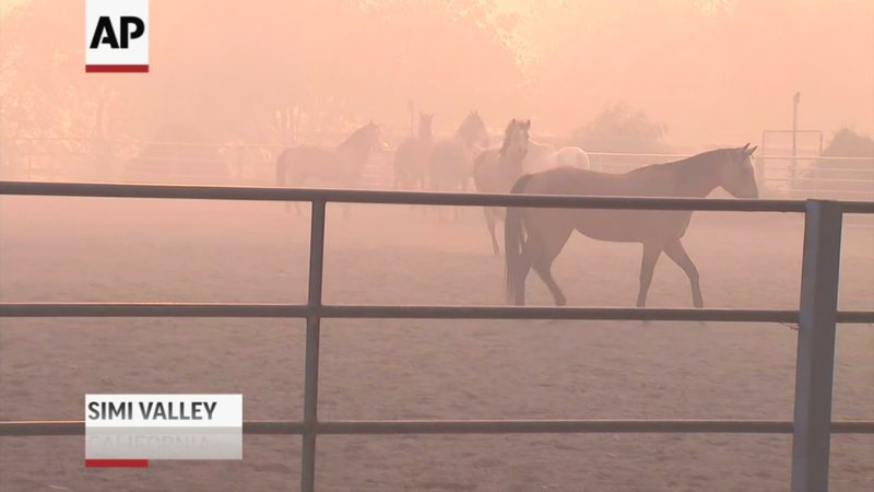 People are working to get horses away from the smoke and flames as a wind-driven wildfire burning northwest of Los Angeles has grown to 1,300 acres. (Oct. 30)