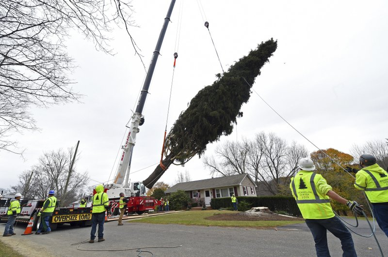 IMAGE DISTRIBUTED FOR TISHMAN SPEYER- This year's Rockefeller Center Christmas tree, a 77-foot tall, 12-ton Norway Spruce, is craned onto a flatbed truck after being cut from the yard of Carol Schultz, Thursday, Nov. 7, 2019, in Florida, NY. The tree will be brought into New York City by flatbed truck and erected at Rockefeller Center on Saturday, Nov. 9. The 87th Rockefeller Center Christmas Tree Lighting ceremony will take place on Wednesday, Dec. 4. (Diane Bondareff/AP Images for Tishman Speyer)