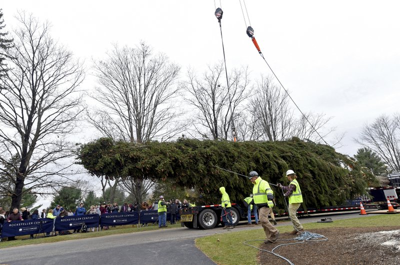 IMAGE DISTRIBUTED FOR TISHMAN SPEYER- This year's Rockefeller Center Christmas tree, a 77-foot tall Norway Spruce, is guided onto a flatbed truck after being cut from the yard of Carol Schultz, Thursday, Nov. 7, 2019, in Florida, NY. The tree will be brought into New York City by flatbed truck and erected at Rockefeller Center on Saturday, Nov. 9. The 87th Rockefeller Center Christmas Tree Lighting ceremony will take place on Wednesday, Dec. 4. (Diane Bondareff/AP Images for Tishman Speyer)