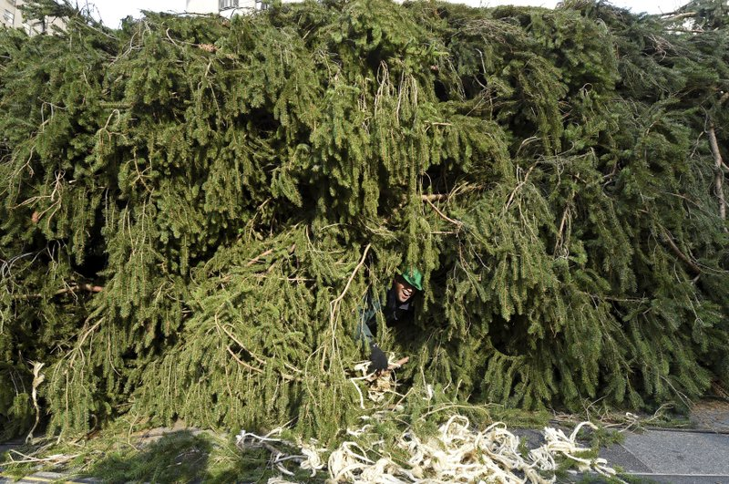 IMAGE DISTRIBUTED FOR TISHMAN SPEYER -  A crew member smiles from inside the 2019 Rockefeller Center Christmas tree, a 77-foot tall, 12-ton Norway Spruce from Florida, N.Y., before it is craned into place, Saturday, Nov. 9, 2019, in New York. The 87thRockefeller Center Christmas Tree Lighting ceremony will take place on Wednesday, Dec. 4. (Diane Bondareff/AP Images for Tishman Speyer)