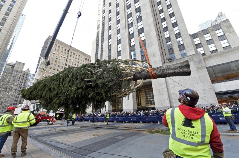 IMAGE DISTRIBUTED FOR TISHMAN SPEYER - Workers prepare to raise the 2019 Rockefeller Center Christmas tree, a 77-foot tall, 12-ton Norway Spruce from Florida, N.Y., Saturday, Nov. 9, 2019, in New York. The 87thRockefeller Center Christmas Tree Lighting ceremony will take place on Wednesday, Dec. 4. (Diane Bondareff/AP Images for Tishman Speyer)