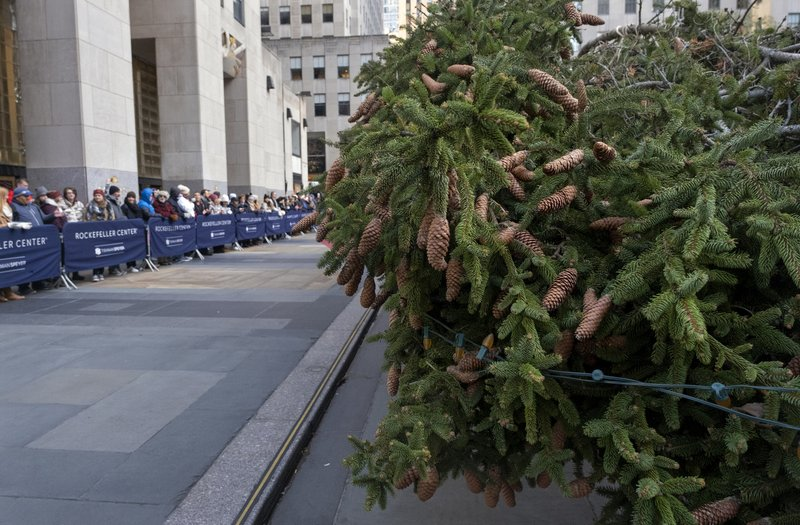 Spectators look on as the 2019 Rockefeller Center Christmas tree, a 77-foot tall, 12-ton Norway Spruce, lays on its side after arriving at Rockefeller Center Saturday, Nov. 9, 2019, in New York. The tree lighting ceremony will take place on Wednesday, Dec. 4. (AP Photo/Craig Ruttle)
