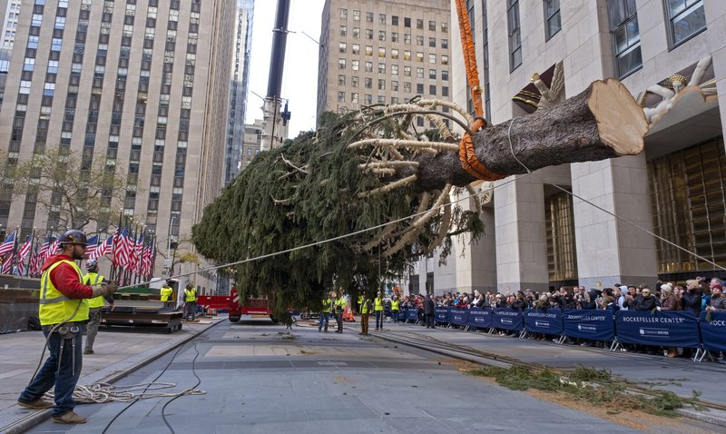 The 2019 Rockefeller Center Christmas tree, a 77-foot tall, 12-ton Norway Spruce, is lifted and prepared for setting on a platform at Rockefeller Center Saturday, Nov. 9, 2019, in New York. The tree lighting ceremony will take place on Wednesday, Dec. 4. (AP Photo/C)
