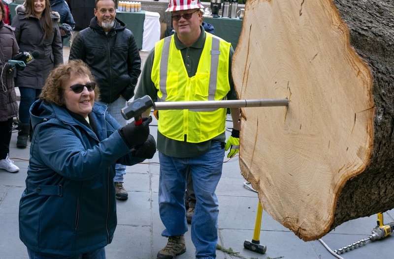 Carol Schultz, who donated the 77-foot tall, 12-ton Norway Spruce for the 2019 Rockefeller Christmas Tree, pounds a spike in the base of the tree Saturday, Nov. 9, 2019, in New York. The tree will stand at Rockefeller Center and be lighted Wednesday, Dec. 4. (AP Photo/Craig Ruttle)