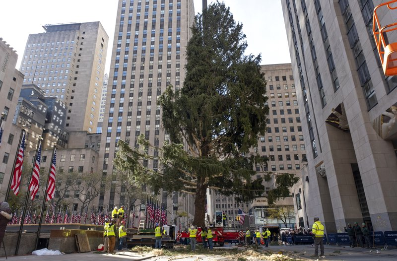 The 2019 Rockefeller Center Christmas tree, a 77-foot tall, 12-ton Norway Spruce, is moved to a platform where it will be secured at Rockefeller Center Saturday, Nov. 9, 2019, in New York. The tree lighting ceremony will take place on Wednesday, Dec. 4. (AP Photo/Craig Ruttle)