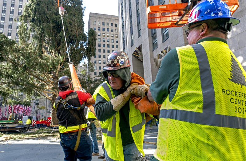 Workers work to free a cable as its released from the 2019 Rockefeller Center Christmas tree, a 77-foot tall, 12-ton Norway Spruce, as its prepared for setting on a platform at Rockefeller Center Saturday, Nov. 9, 2019, in New York. The tree lighting ceremony will take place on Wednesday, Dec. 4. (AP Photo/Craig Ruttle)