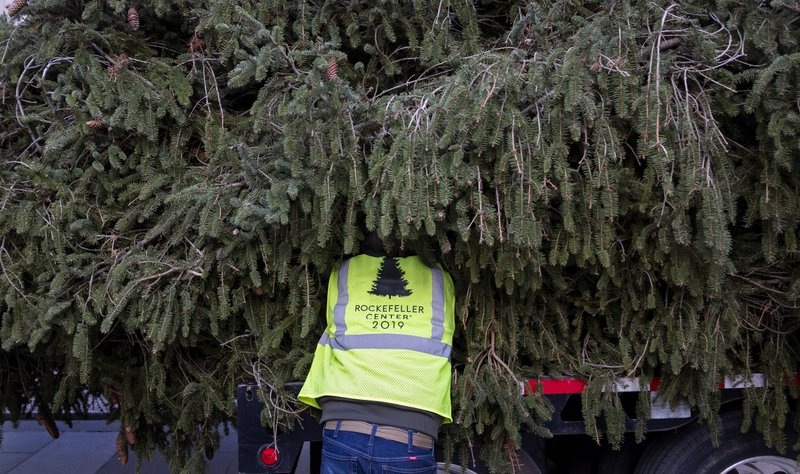 A worker helps prepare the 2019 Rockefeller Center Christmas tree, a 77-foot tall, 12-ton Norway Spruce, for lifting upright to a platform at Rockefeller Center Saturday, Nov. 9, 2019, in New York. The tree lighting ceremony will take place on Wednesday, Dec. 4. (AP Photo/Craig Ruttle)