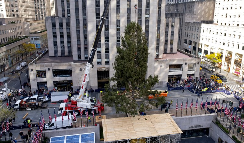 The 2019 Rockefeller Center Christmas tree, a 77-foot tall, 12-ton Norway Spruce, is secured after it was set on a platform at Rockefeller Center Saturday, Nov. 9, 2019, in New York. The tree lighting ceremony will take place on Wednesday, Dec. 4. (AP Photo/Craig Ruttle)
