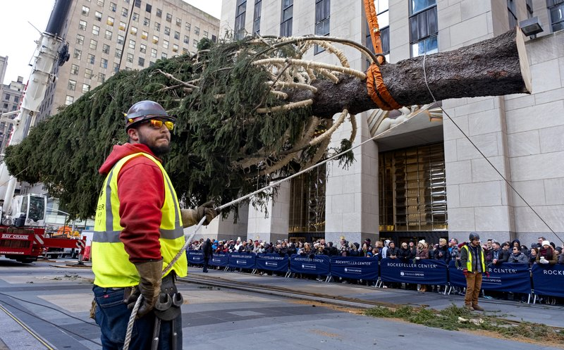 The 2019 Rockefeller Center Christmas tree, a 77-foot tall, 12-ton Norway Spruce, is prepared for setting on a platform at Rockefeller Center Saturday, Nov. 9, 2019, in New York. The tree lighting ceremony will take place on Wednesday, Dec. 4. (AP Photo/Craig Ruttle)