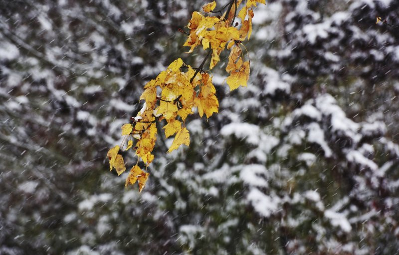 Snow accumulates on trees in Niles, Mich., Monday, Nov. 11, 2019, after a fall snowstorm dumped several inches of snow on southwest Michigan. (Don Campbell/The Herald-Palladium via AP)
