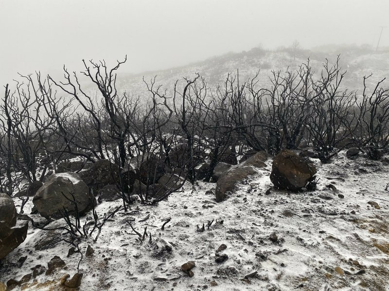 This photo tweeted by the Santa Barbara County Fire Department shows the recently charred chaparral covered in snow, a rare sight for the Santa Barbara South Coast in Santa Barbara, Calif., Thursday, Nov. 28, 2019. Wintry weather temporarily loosened its grip across much of the U.S. just in time for Thanksgiving, after tangling holiday travelers in wind, ice and snow and before more major storms descend Friday. (Mike Eliason/Santa Barbara County Fire via AP)