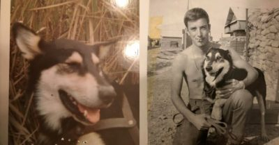 Vietnam War vet on a mission to honor a dog who saved his life