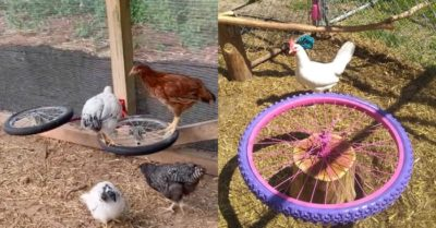 Home hack: Taking old bicycle wheel to make a carousel for chickens