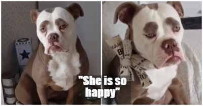 Madame Eyebrows appears to be the saddest dog on the internet