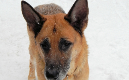 South Dakota police dog South Dakota police dog not fan of new snow boots